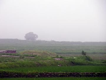 霧にけむる幻想的な田園風景