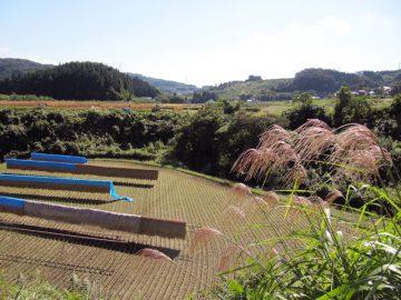 永田の田園風景;収穫の秋