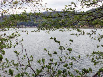 木崎湖)曇った空に少し荒れた水面
