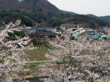 桜越しに聖高原の駅がきれいに見えた