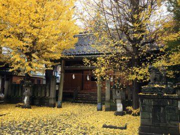 黄色一色、秋の秋葉神社