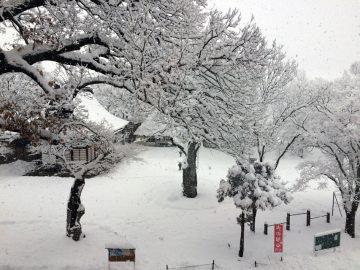 大雪の宇達神社(降雪中)