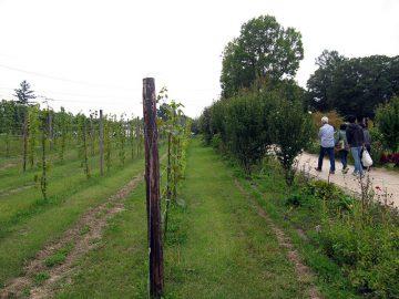ワイナリーのブドウ園